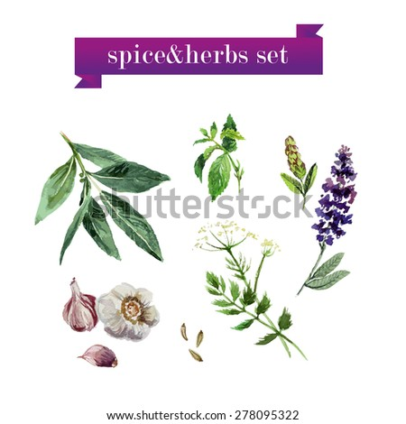 Vector set of watercolor fresh vegetables on white background. Fresh food illustration. Good for magazine and book articles, poster design, restaurant menu template. - stock vector