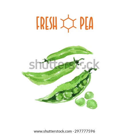 Vector set of watercolor pea elements on white background. Cute illustration is good for magazine or book, poster and card design, menu cover. - stock vector