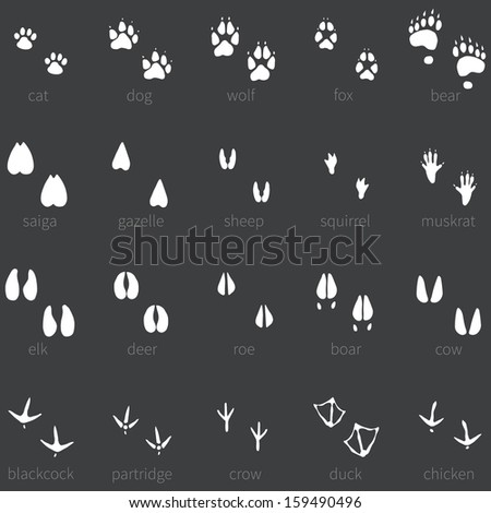 Vector set of 20 white animal footprints icon - stock vector