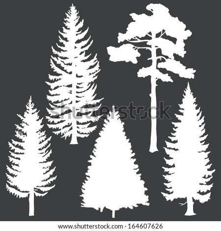 vector set of white coniferous trees silhouettes - stock vector
