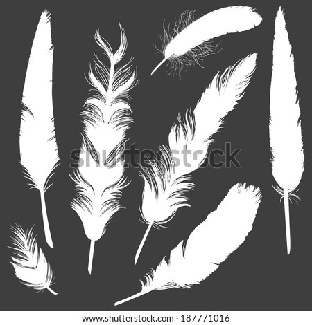 Vector Set of white Plumage Silhouettes - stock vector