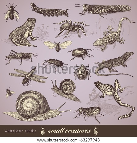 vector set: small creatures - collection of various small animals - stock vector