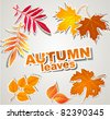 vector set stickers : autumn leaves - stock vector