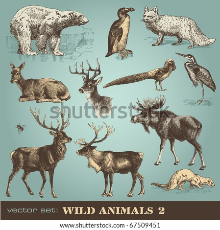 vector set: wild animals (2) - stock vector