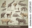 vector set: wild animals - variety of retro animal illustrations - stock photo