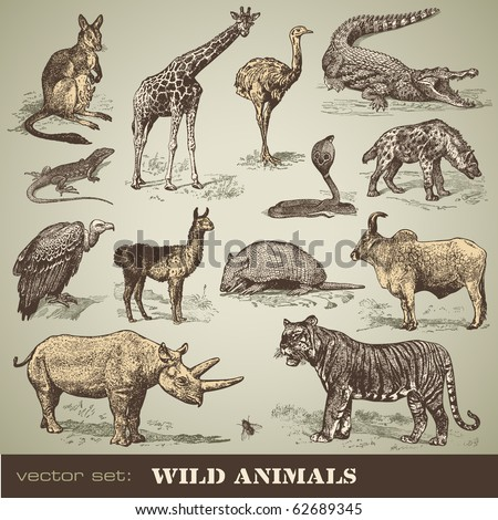 vector set: wild animals - variety of retro animal illustrations