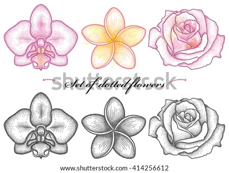 Vector set with dotted flower of Orchid, Plumeria or Frangipani and Rose in black and in color isolated on white background. Collection with floral elements in dotwork style for summer design.  - stock vector