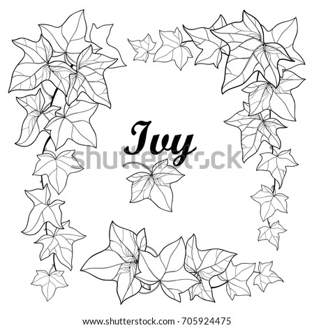 Ivy Vine Coloring Pages