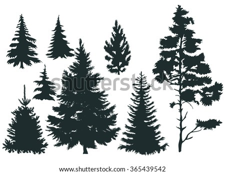Vector set with pine trees isolated on white background - stock vector