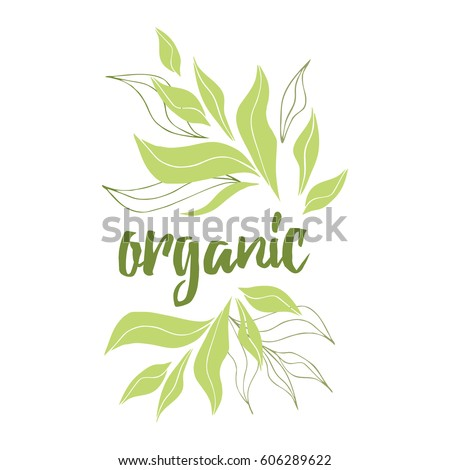 Tea Tree Leaf Vector Stock Vector 553274728 Shutterstock