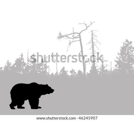 vector silhouette bear - stock vector