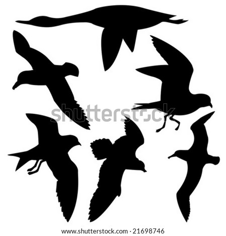 vector silhouette flying birds on white background - stock vector