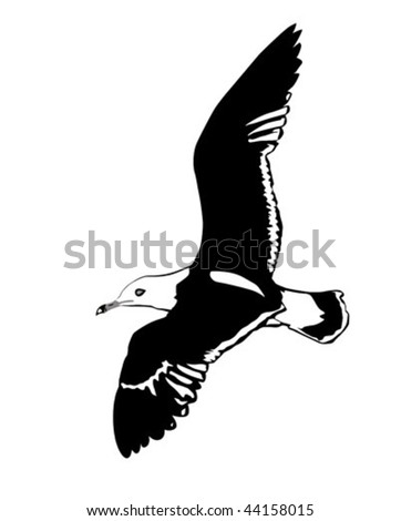 vector silhouette flying sea gulls on white background - stock vector