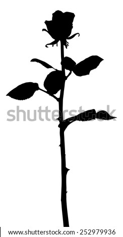 Vector silhouette of a stalk of rose, isolated against white.  - stock vector