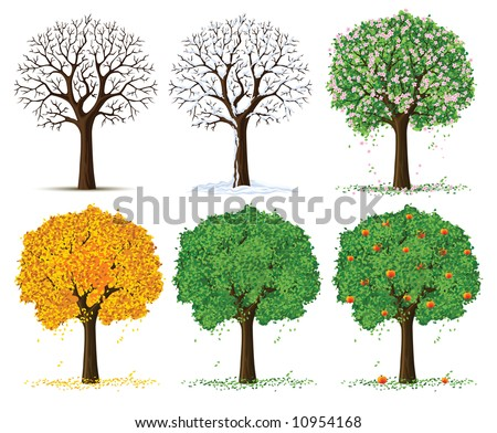 vector silhouette of autumn, spring, summer and winter season tree isolated on the white background - stock vector