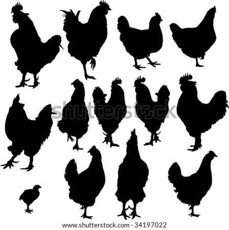 vector silhouette of group hens and roosters - stock vector