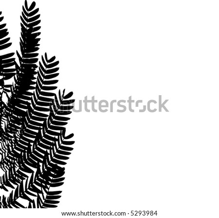 Vector silhouette of mimosa leaves