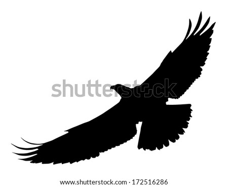 Vector silhouette of the Bird of Prey (Osprey) in flight with wings spread. - stock vector