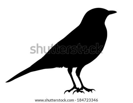 Stock Images similar to ID 92869771 - bird mistle thrush