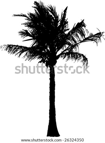 vector silhouette of the palm tree isolated on white background - stock vector
