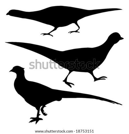 vector silhouette of the pheasant on white background - stock vector