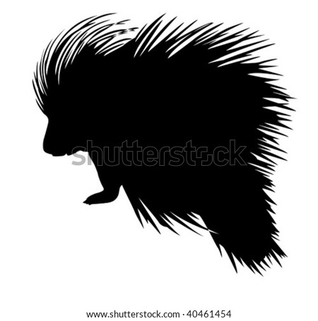 vector silhouette of the porcupine on white background - stock vector