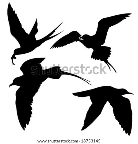 vector silhouette of the sea birds on white background - stock vector