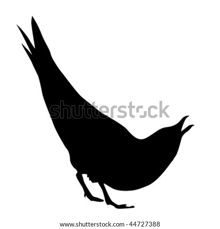 vector silhouette of the sea gull on white background - stock vector