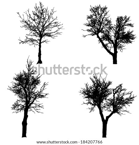 Vector silhouette of tree on a white background.