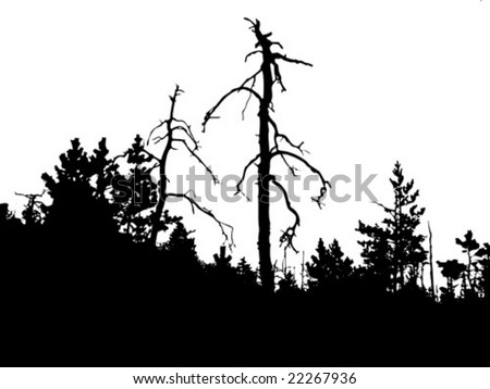 vector silhouette old pine wood on white background - stock vector