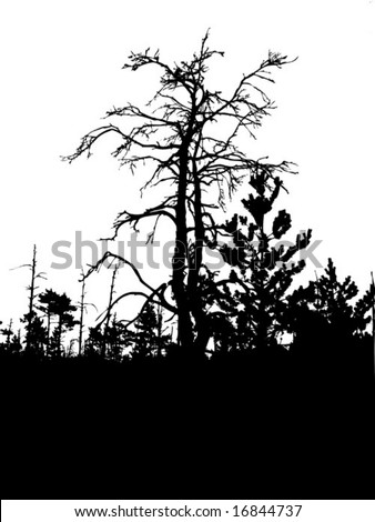 vector silhouette old tree isolated on white background - stock vector