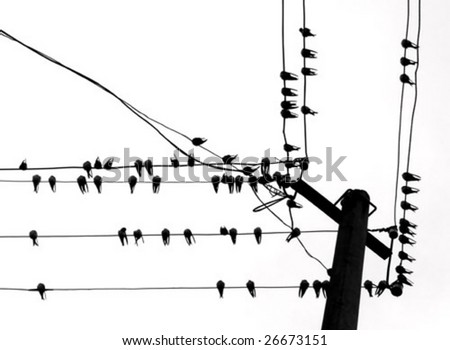 vector silhouette swallow on wire - stock vector