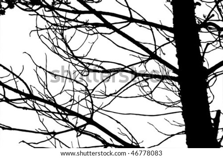 vector silhouette tree on white background