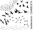 Vector silhouettes: a flock of birds, crows, swans, geese./ Silhouette a flock of birds - stock vector