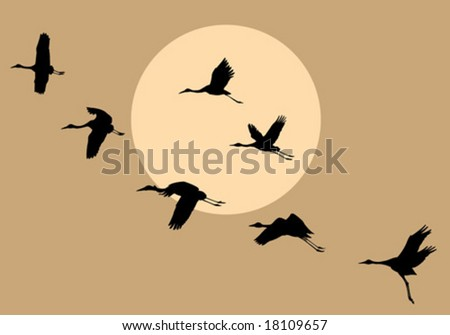 vector silhouettes flying cranes on background sun - stock vector