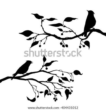 vector silhouettes of birds at tree, hand drawn waxwings at branch of wild apple tree, isolated vector element - stock vector