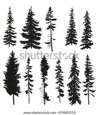 vector silhouettes of different pine trees