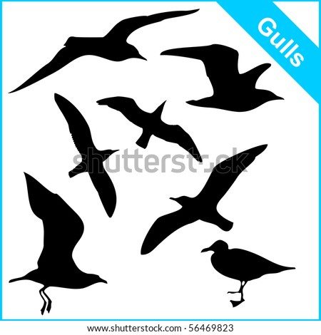 vector silhouettes of sea gulls in various poses