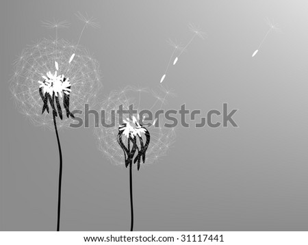 Vector. Silhouettes of two dandelions in the wind.