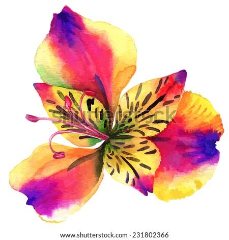 vector single alstroemeria flower. beautiful watercolor illustration.  - stock vector