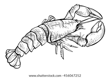 Hand Drawn Illustration Plum Vector Vintage 519060436 moreover Landscape Ink Sketch Drawing Rural Mediterranean 598700441 as well Line Sketch Hand Drawn Salmon Steak 548598394 further Sketch Cocktails Alcohol Drinks Set Hand 418140253 besides Music Doodle Vector Set Hand Drawn 468959753. on pinchuk oleksandra