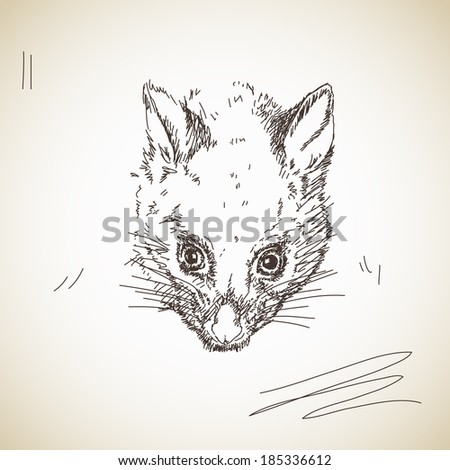 Vector sketch possum muzzle - stock vector