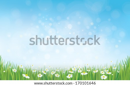 Vector sky background with grass and chamomiles.