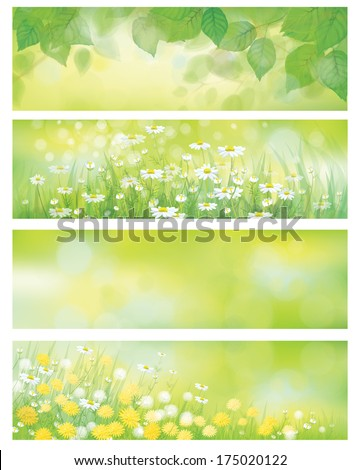 Vector  spring nature banners, birch  tree leaves,  dandelion and chamomile. - stock vector