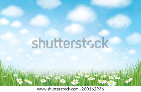 Vector summer landscape, blue sky , meadow and chamomiles. - stock vector