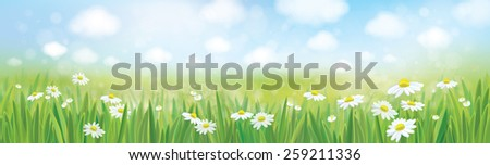 Vector summer landscape, blue sky, meadow with chamomiles. - stock vector