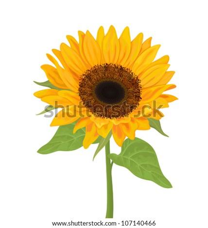 Vector sunflower - stock vector