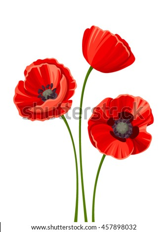 Vector three red poppies with stems isolated on a white background.