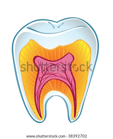 vector tooth on section isolated on a white background - stock vector