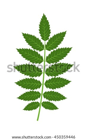 Vector tropical leaves Green tree leave. Natural green leaf isolated. Leaf element floral color garden art. Tropical leave tree element. Natural green tropical leave flat style - stock vector